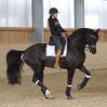evolution-of-equestrian-equipment